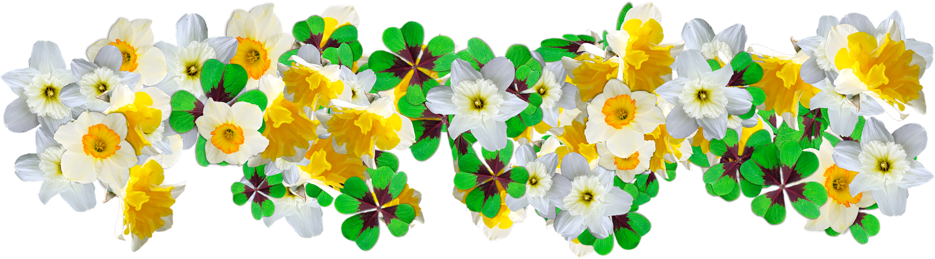 Daffodils and clover by MLARANDA from Pixabay